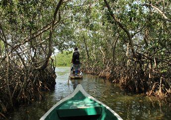 Tumbuhan yang Hidup di Air, Mangrove si Penyelamat Lingkungan