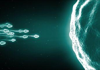Menelan Cairan Sperma Sebabkan Kehamilan dan 5 Mitos Seputar Sperma, Moms Wajib Tahu!