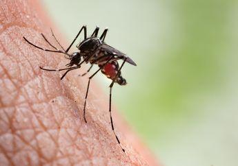 Nyamuk Gemar Menghisap Darah Orang Tertentu? Benarkah Gen Penyebabnya?