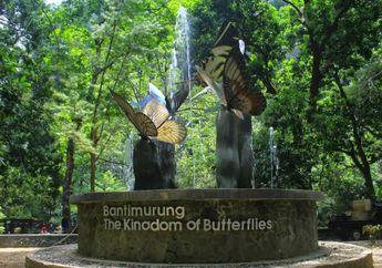 Menapak Jejak Kerajaan Kupu-kupu di Taman Nasional Bantimurung