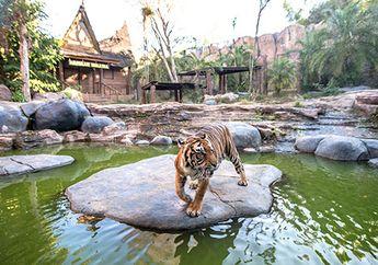 Menjelajah Batu Secret Zoo, Kebun Binatang Terbaik di Indonesia