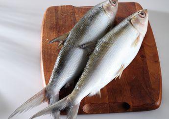 Cara Mengeluarkan Tulang Dan Daging Ikan Bandeng, Semua Pasti Bisa