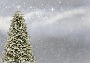 Penduduk Amerika Serikat Saat Ini Bisa Mengadopsi Pohon Natal, lo!