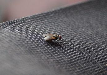 Ingin Usir Lalat di Rumah? 7 Langkah Sederhana Ini Terbukti Ampuh, Loh!