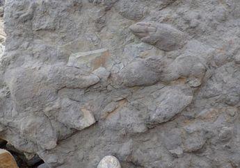Setelah 30 Tahun Penemuan, Akhirnya Dinosaurus ini Ditetapkan Sebagai Spesies Baru