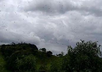 Ratusan Laba-laba Hujani Wilayah Negara Brazil, Apa Penyebabnya?