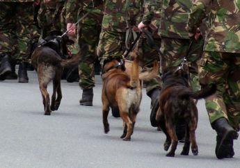 Ketika Uni Soviet Korbankan Anjing Untuk Lawan Tank Kuat Nazi Jerman