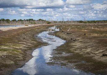 Menjaga Habitat Mangrove, Meraih Asa di Delta Kayan Sembakung