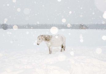 Menapaki Kesunyian Siberia dalam Dinginnya Salju