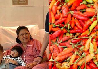 Ani Yudhoyono Tidak Bisa Jauh dari Cabai Rawit, Si Kecil yang Simpan Segudang Manfaat untuk Kesehatan