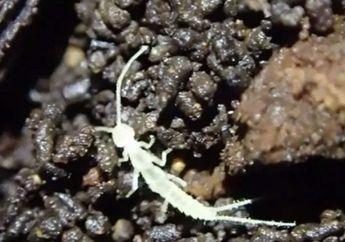 Menakjubkan, Spesies Ini Bertahan di Dalam Gua Sejak Zaman Es