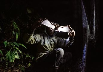 FOTO: Kelelawar Penyebar Penyakit Manusia
