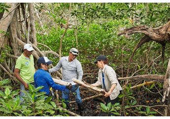 Peringati Earth Day, Apple Canangkan Program Konservasi Hutan Mangrove