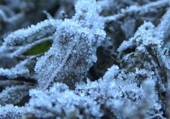 Kata Ahli Jadi Fenomena Biasa, Wisatawan Berlomba Abadikan Embun Beku di Bromo dan Semeru