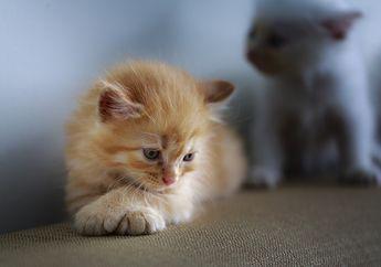 Kucing Terkenal Sebagai Hewan yang Cuek, Tapi Apa Kucing Bisa Merasakan Sedih Juga Jika Pemiliknya Meninggal Dunia?