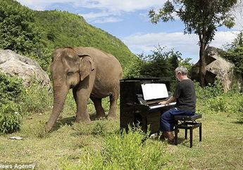 Bikin Haru, Kisah Hangat Persahabatan Gajah Buta dengan Musisi Ini Unik dan Inspiratif