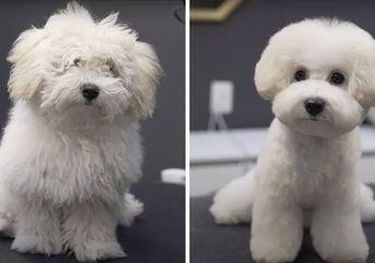 Menggemaskan! Salon Ini Bisa Menyulap Anjing-Anjing Kumal Jadi Rapi dan Bersih Bak Boneka