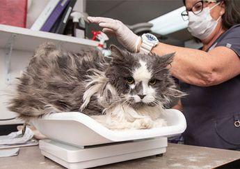 Punya Bulu Lebat dan Kusut sampai Enggak Bisa Dikenali, Kucing Ini Alami Perubahan Drastis Setelah Diselamatkan