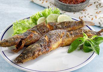 Berita Ikan Lele Terbaru Hari Ini Sajian Sedap