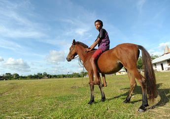 Cerita Anak Sumba dan Kuda Kesayangannya