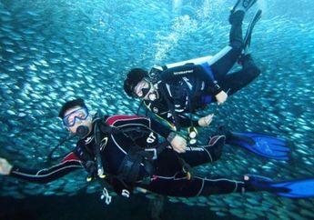 Apa Sih Bedanya Diving dengan Snorkeling? Ini Dia Jawabannya