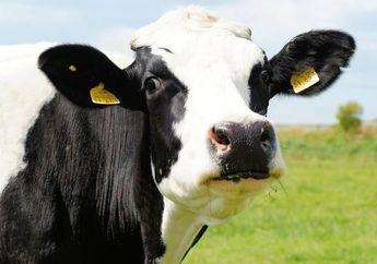 Siapa yang Menyangka, Hewan-hewan Ini Lebih Sering Membunuh Manusia Ketimbang Hiu