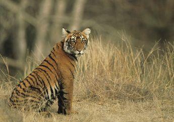 Akibat Ulah Manusia, Hewan-hewan Mengalami Perubahan Perilaku