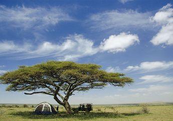 Bersafari ke Tanah Maasai