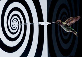 Sayap Burung Kolibri Menginspirasi Pembuatan Drone dan Teknologi Lainnya