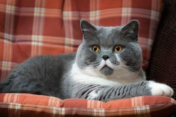 Lucu Banget Inilah 9 Jenis Ras Kucing Yang Paling Menggemaskan Di Dunia Semua Halaman Hai