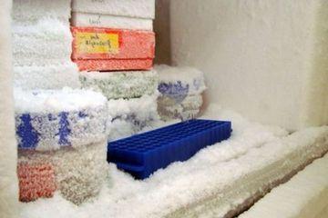 Freezer Penuh Bunga Es Bisa Jadi Cepat Rusak Bersihkan Dengan