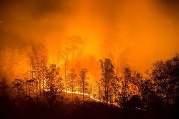 9 Alasan Mengapa Perubahan Iklim Memicu Kebakaran di Berbagai Negara