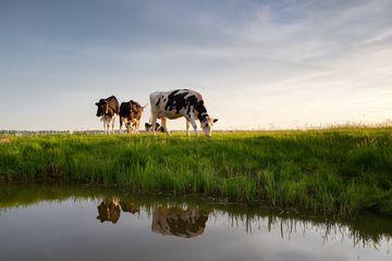 Dampak Makan Daging Terhadap Perubahan Iklim, Tidak Seperti yang Dibayangkan?