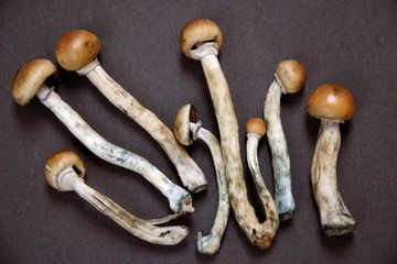 Studi: Magic Mushroom Miliki Efek Antikecemasan dan Antidepresan dalam Waktu Lama