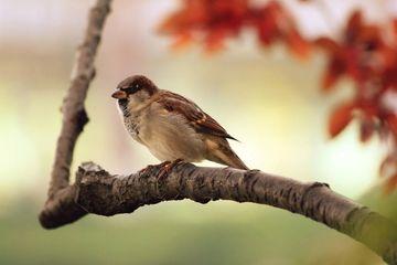 Mitos 5 Burung Ini Masuk Rumah Pertanda Baik Atau Burukkah Ini Semua Halaman Suar