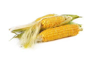 diabetes nasder jagung untuk penderita