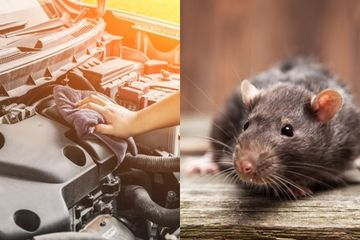 Fatal Bila Dibiarkan, Simak Cara Mengusir Tikus dari Ruang Mesin...