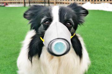 Akibat Virus Corona, Penjualan Masker Anjing di Tiongkok Ikut Melonjak