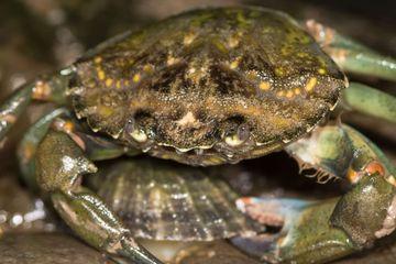 Ilmuwan Kembangkan Gelas Plastik dari Kulit Kepiting, Seperti Apa?