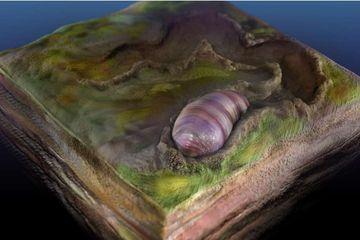Fosil Cacing Kuno Tertua Ini Ungkap Evolusi Hewan Bilateria