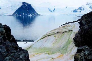 Sebagian Salju Antartika Menjadi Hijau Akibat Perubahan Iklim