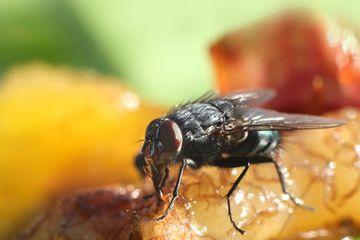 Begini Rupanya Cara Mengusir Lalat Seperti Yang Dilakukan Pemilik Warteg Cuma Pakai Bahan Dapur Berikut Ini Kunci Rahasianya Semua Halaman Intisari