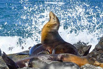 Menemukan Kedamaian di Kepulauan Galapagos, Sumber Teori Darwin