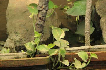 5 Contoh Mudah Perkembangbiakan Vegetatif Alami Dan Vegetatif Buatan Pada Tumbuhan Ini Yang Harus Kamu Tahu Semua Halaman Nakita