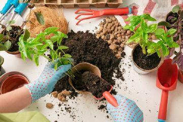 Coba Ke Dapur Dan Ambil Sejumput Micin Untuk Menyuburkan Tanah Lihat Perubahan Menakjubkan Ini Pada Tanaman Di Rumah Semua Halaman Nakita