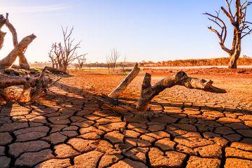 Inilah Lima Kepunahan Massal yang Pernah Dialami Bumi