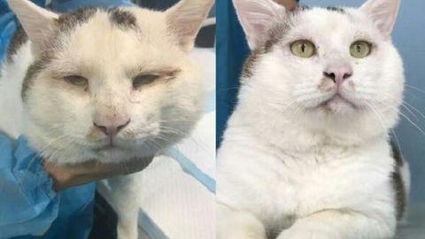 Unduh 92+  Gambar Kucing Wajah Manusia Lucu Gratis