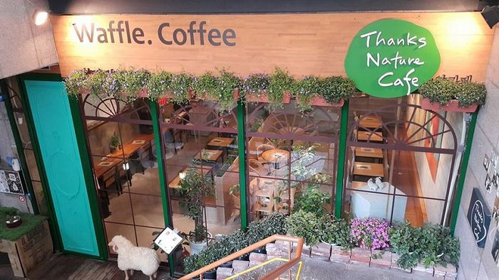Thanks Nature Cafe di kawasan Hongdae, Seoul