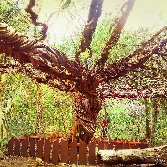 Pohon trinil mirip pohon dedalu perkasa dalam film Harry Potter.