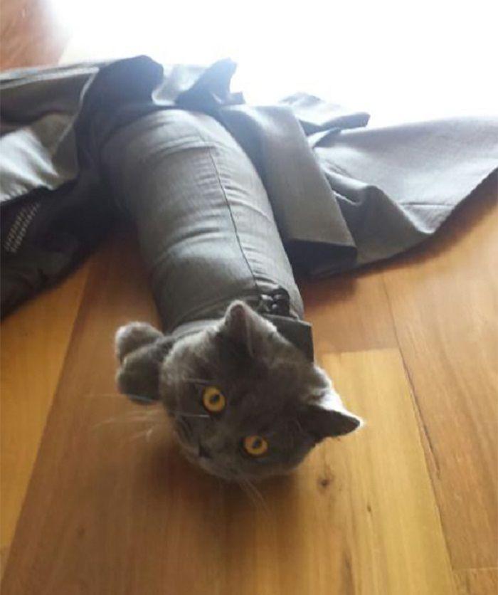 Tingkah lucu seekor kucing